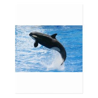 Orca Killer Whale Post Card