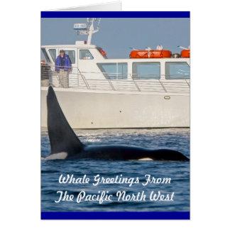 Orca Killer Whale -transient, washington Greeting Card