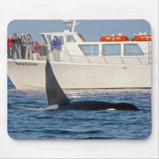 Orca Killer Whale -transient, washington Mouse Pad