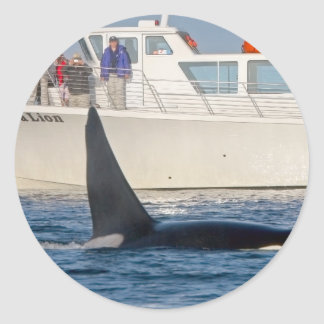 Orca Killer Whale -transient, washington Round Sticker