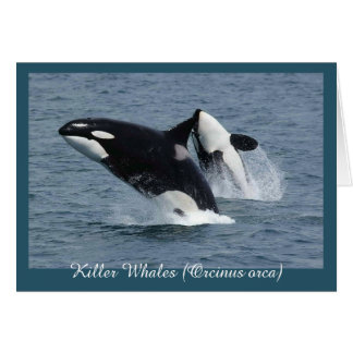 Orca Killer Whales Breaching Personalized Greeting Card
