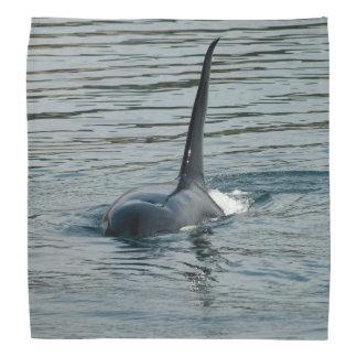 Orca on the hunt bandana