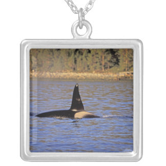 Orca or Killer whale. Silver Plated Necklace