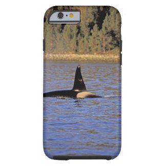 Orca or Killer whale. Tough iPhone 6 Case
