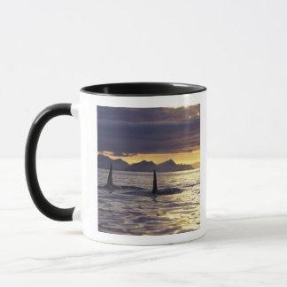 Orca or Killer whales Mug