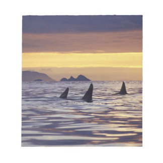 Orca or Killer Whales Notepad