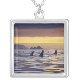 Orca or Killer Whales Silver Plated Necklace