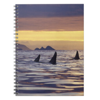 Orca or Killer Whales Spiral Notebook