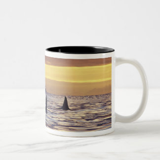 Orca or Killer Whales Two-Tone Coffee Mug