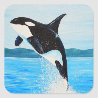 Orca Square Sticker