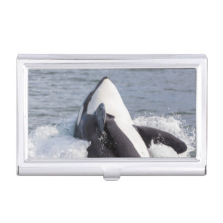 Orca whale breaching business card holder