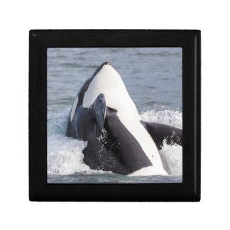 Orca whale breaching gift box
