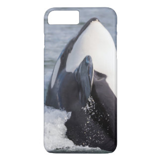 Orca whale breaching iPhone 8 plus/7 plus case