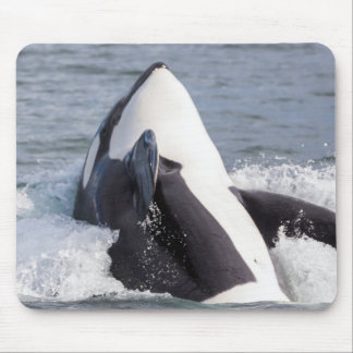 Orca whale breaching mousepad