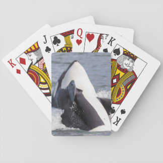 Orca whale breaching poker deck