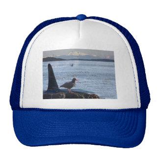 Orca Whale, Oyster Catcher Cascades Montage Cap
