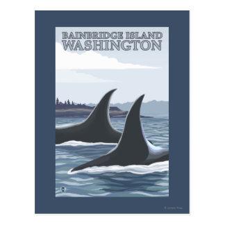 Orca Whales #1 - Bainbridge Island, Washington Postcard