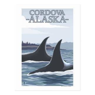 Orca Whales #1 - Cordova, Alaska Postcard