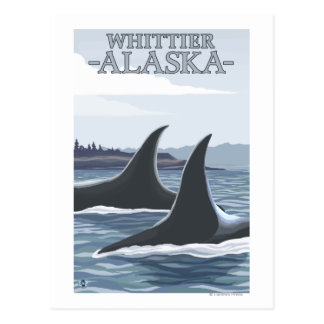 Orca Whales #1 - Whittier, Alaska Postcard
