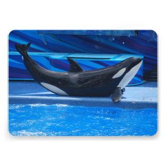 Orca Whales Invites