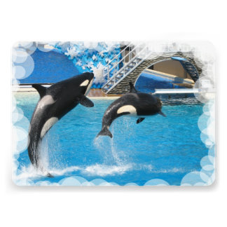 Orca Whales Custom Invites