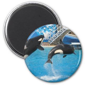 Orca Whales Magnet Fridge Magnet