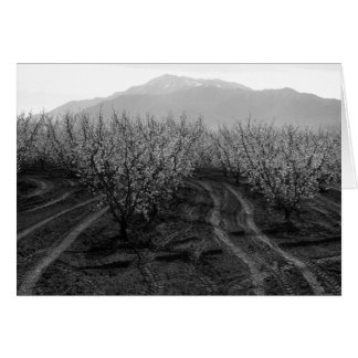 Orchards at Banning Heights, Mt. San Jacinto, 1966 Card