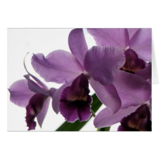Orchid 1 All-Purpose Greeting/Invitation Card