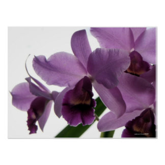 Orchid 1 posters