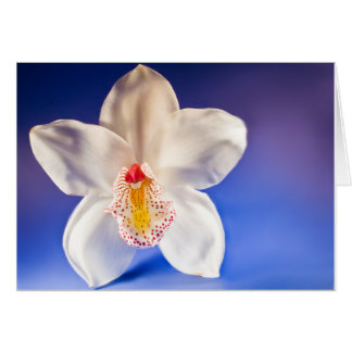 Orchid Any Day Card