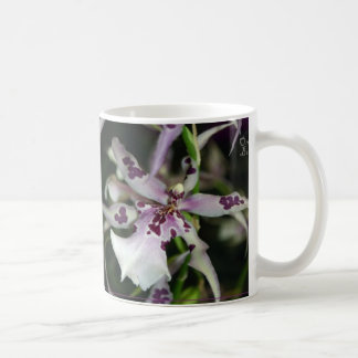 Orchid Beallara Mug