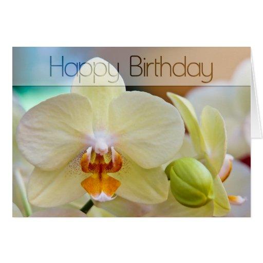 Orchid • Birthday Card