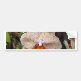 Orchid Bloom 1 Bumper Sticker