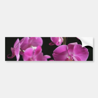 Orchid Blossoms Bumper Stickers