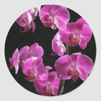 Orchid Blossoms Sticker