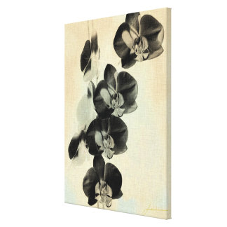 Orchid Blush Panels III Canvas Print