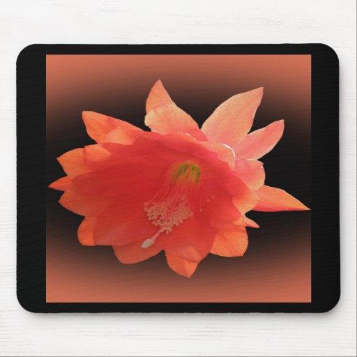 Orchid Cactus - Epiphyllum Ackermannii - Blossom Mousepads