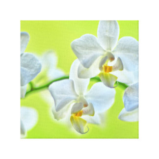 Orchid canvas
