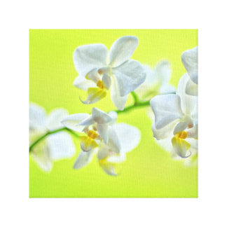 Orchid canvas 2