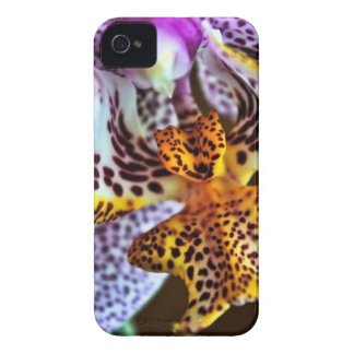 Orchid Case-Mate iPhone 4 Cases