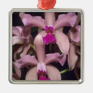 Orchid, (Cattleya amethystoglossa), Eastern Christmas Ornament