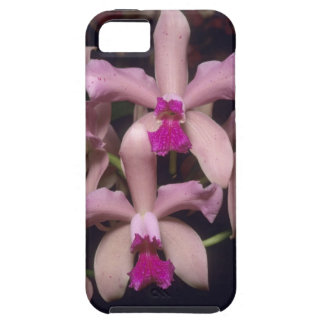 Orchid, (Cattleya amethystoglossa), Eastern iPhone 5 Cover