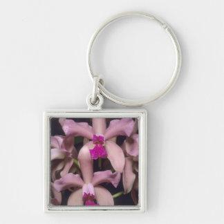 Orchid, (Cattleya amethystoglossa), Eastern Key Ring