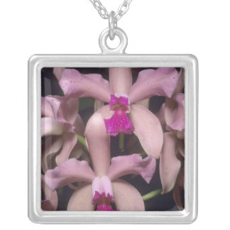 Orchid, (Cattleya amethystoglossa), Eastern Silver Plated Necklace