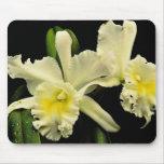 Orchid cattleya (Deesse Charles)  flowers Mousepad
