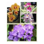 Orchid Collage Postcard