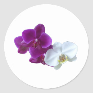 Orchid Contrasts Classic Round Sticker