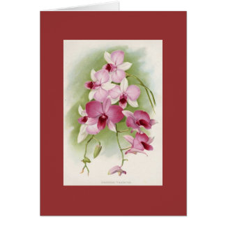 Orchid - Dendrobium Phalaenopsis Greeting Card