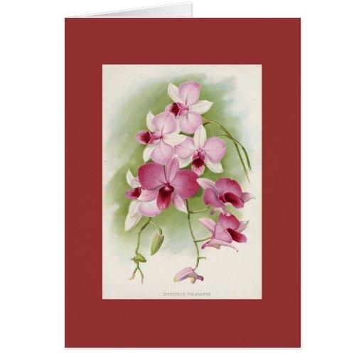Orchid - Dendrobium Phalaenopsis Greeting Card