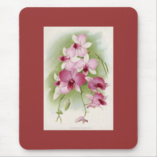 Orchid - Dendrobium Phalaenopsis Mouse Pad